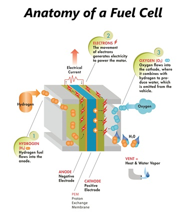 The illustration above shows the anatomy ofa fuel cell system. Beginning with hydrogen, electrons and oxygen work together to emit only heat and water vapor.
