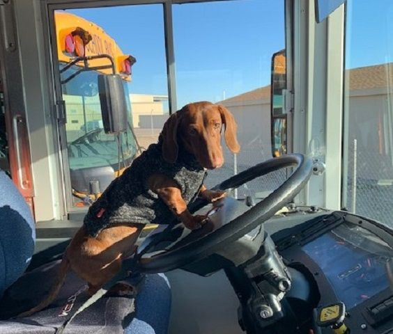 Posts on the challenges faced by school bus companies in the midst of the COVID-19 pandemic and a therapy dog boosting staff morale for one school district drew the most attention on SBF's blog and social media. - Photo courtesy Tommy Sims