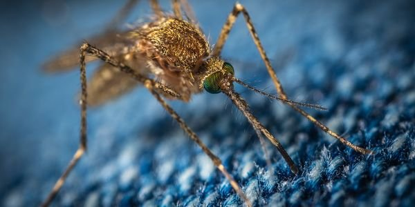 Don't Use a Cannon to Swat a Mosquito [Commentary]
