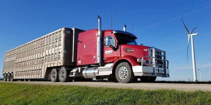 - Photo:Steve's Livestock Transport