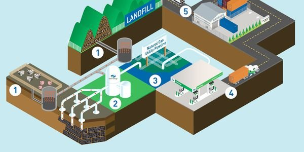 By capturing and processing the methane emitted from organic sources, renewable natural gas has...