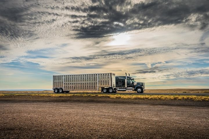 The W990 comes as a day cab, a 40-inch flat top sleeper, and 52- and 76-inch mid-roof sleepers.