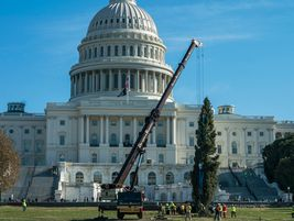 The tradition of the U.S. Capitol Christmas tree started in 1964 by then-U.S. Speaker of the...