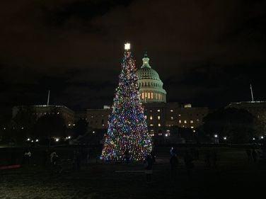 Christmas Tree Makes Journey to Capitol Lighting Ceremony [Photos]