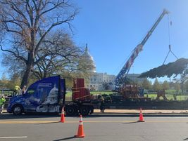 A crane unloads the 2020 U.S. Capitol Christmas Tree from an Apex Transportation Kenworth T680...