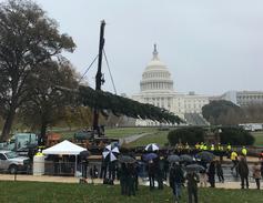 The 80-foot Noble Fir arrived on November 26.