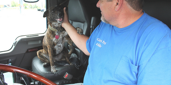 Izzy gets attention from his owner, David Binz, at the wheel of his Kenworth T660. Binz has...