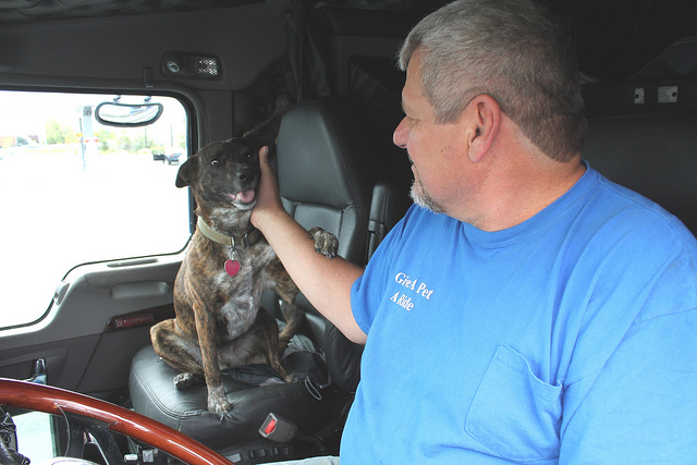 Flatbed Trucker Delivers Not Only Oversized Loads, But Also Pets to New Homes