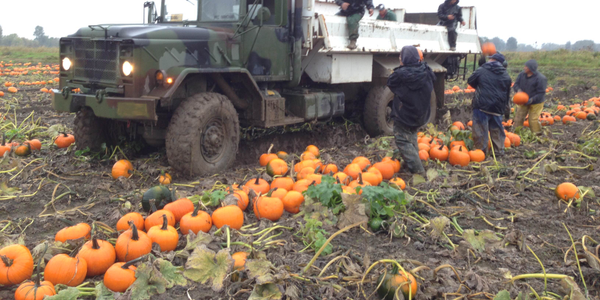 Workers at The Pumpkin Patch in Oregonload the orange orbs aboard a M923 5-ton truck....