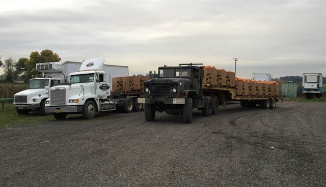 The farm uses lighter-weight commercial-style trucks, like these Freightliners, to carry products to market. When weather's wet, the military trucks get the crops from the fields.