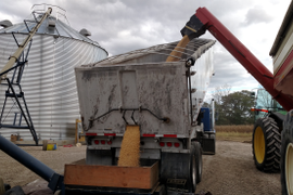 End Dump Plays the Middle Man in Grain Transfer Operation