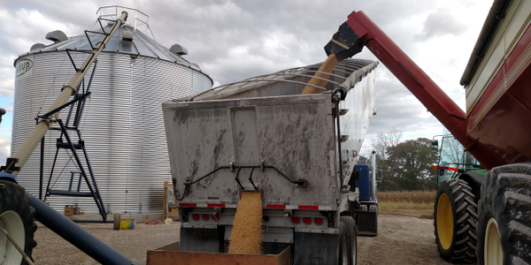 Soybeans move from Killbros field cart (right) into East end dump and then into a silo for...