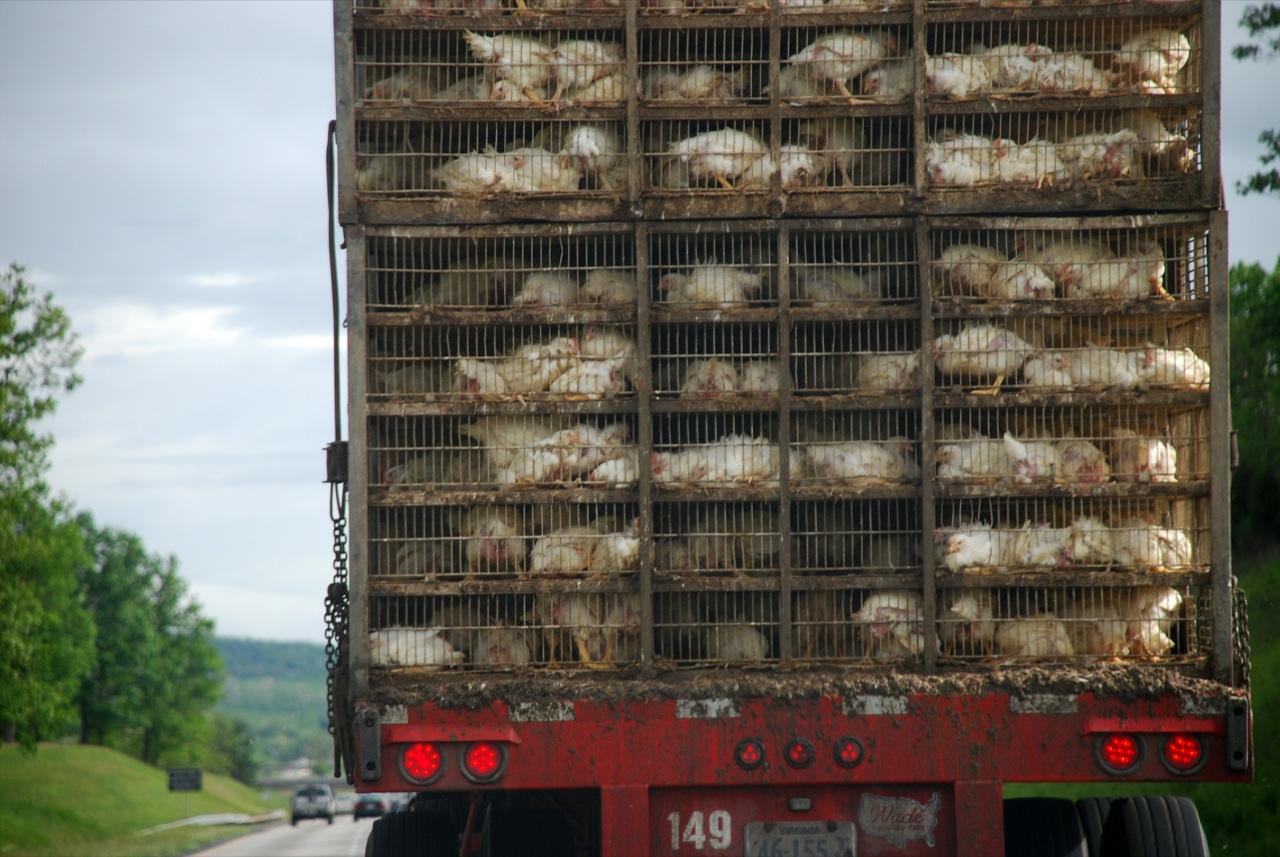 Bird Flu Affecting Trucking in Midwest
