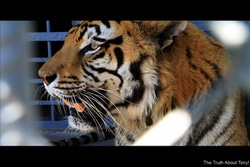 Tony the Truckstop Tiger has to Go