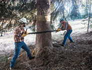 Payette National Forest workers Jared Schuster (left) and Chris Niccoli use a traditional...