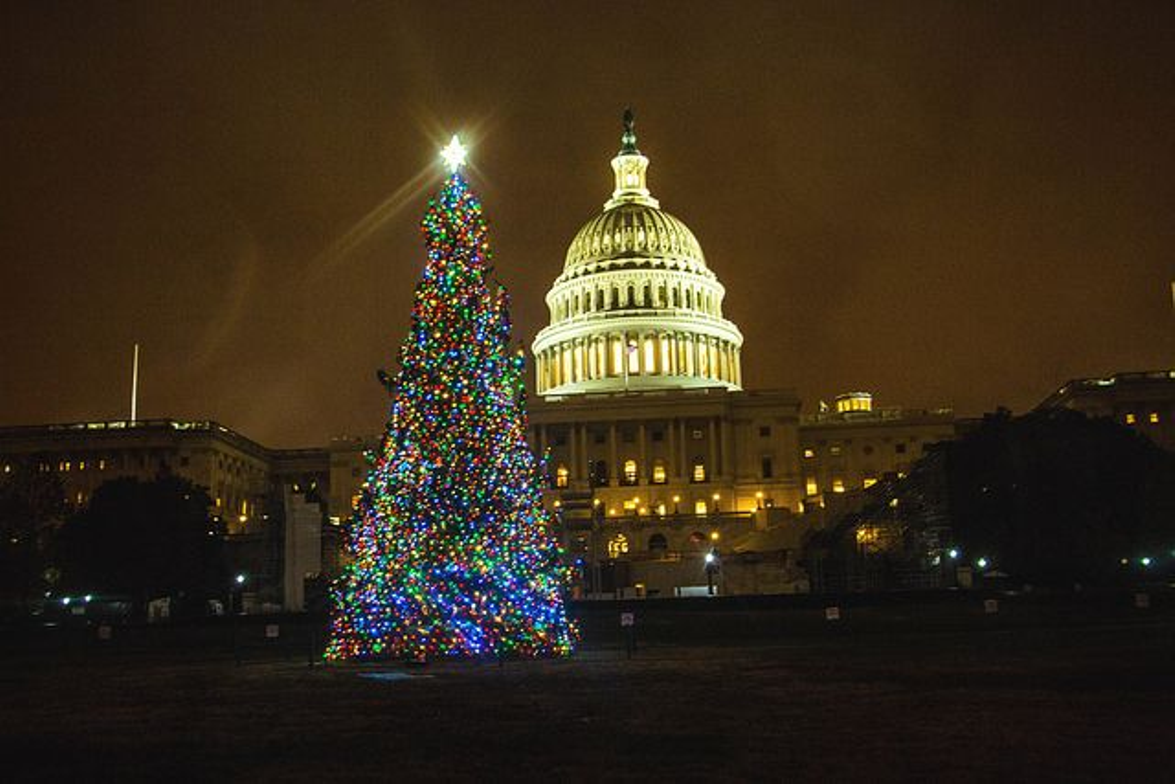 The 2016 U.S. Capitol Christmas Tree, an 80-foot Englemann spruce adorned with thousands of LED...
