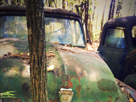 Many vehicles have been in the woods so long trees have grown through their bodies. Photo:...
