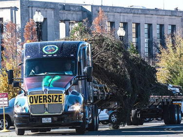 The 74-foot Lutz spruce arrived Friday, Nov. 20, in Washington, D.C., following a more than...