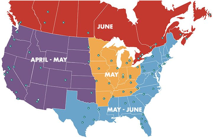 ADESA will rollout its Simulcast service to its various locations inNorth America at separate points this year.  - Image courtesy of ADESA.