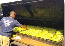 Dealers at 700 ears of corn at Carolina Auto Auction's Corn Roast Sale. PHOTO: ServNet