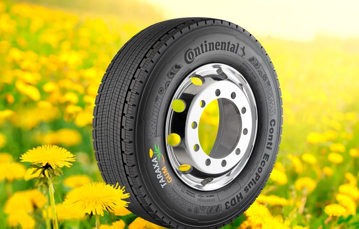 The first sample of a premium winter tire featuring a tread made from pure dandelion rubber was brought onto the road in 2014. The first truck tire with a tread made from Taraxagum then followed at IAA 2016.  - Photo courtesy of Continental